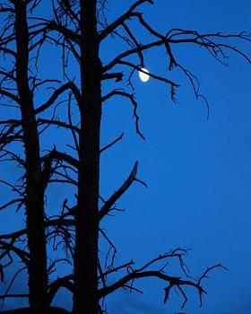 camping Alaska-moon4-50.jpg