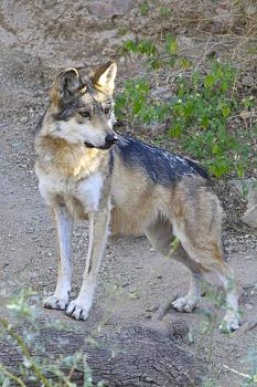 Howling for justice-img_6542.jpg
