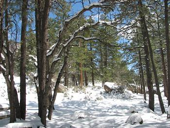 Arizona photos! post them here!-hualapai-snow-151.jpg