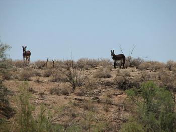 El burro!!!-signal-186.jpg