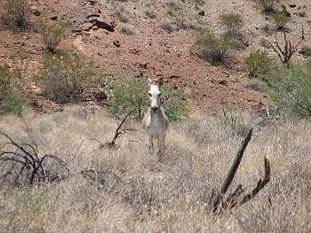 El burro!!!-signal-193.jpg