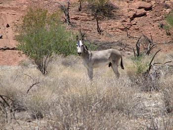 El burro!!!-signal-197.jpg