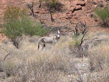 El burro!!!-signal-202.jpg