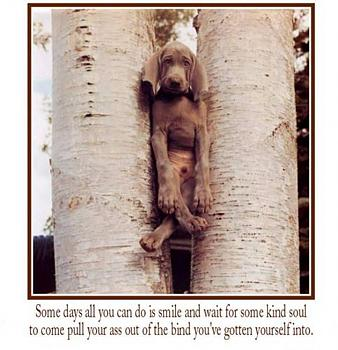"Anyone like things to make you ""laugh"".....try these....!!-dog-trees.jpg"