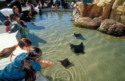 Aquarium Of The Pacific Long Beach Ca Prices