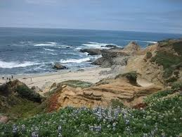 Bodega  Fishing Report on Sonoma Coast State Beach   Bodega Bay  California