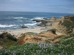 Bodega  Fishing Report on Sonoma Coast State Beach   Bodega Bay  California
