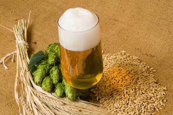 Hops Rhizomes-beerphotoo.jpg