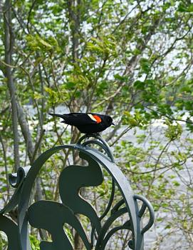 Montreal, Quebec-bird.jpg