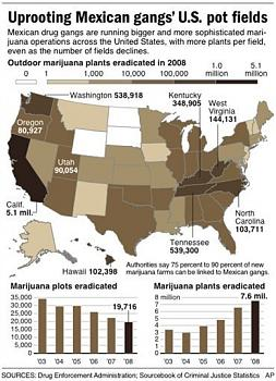 Canada has gone to pot?-uprooting-mexican-gangs-us-pot-fields.jpg