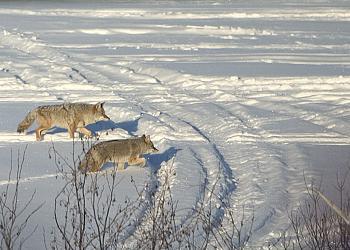 The Canadian Picture Thread!-crw_3910c.jpg