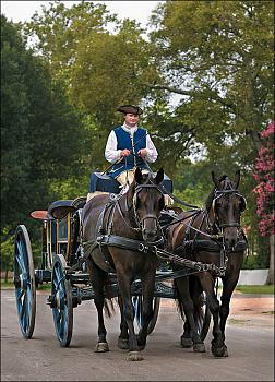 The canadian horse - an interesting history from williamsburg, virginia-canadian-horses.jpg