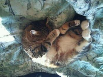 Lets see your furry family members...-image-2402919295.jpg