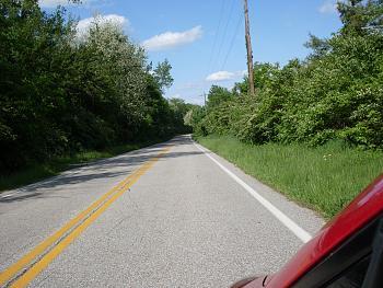 locust trees and honeysuckle-honeysuckle-1.jpg
