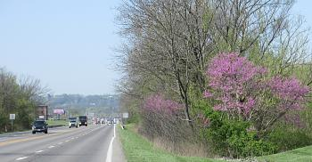 purple everywhere!-redbuds-greendale.jpg