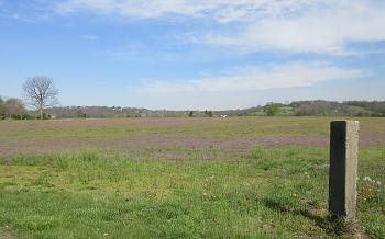 purple everywhere!-violets-elizabethtown.jpg