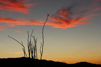 February Picture of the Month-sunset-desert-012-copy.jpg