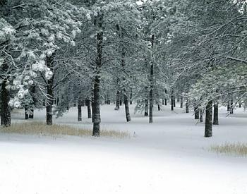 Colorado Winter- Pictures-colorado-winter1.jpg