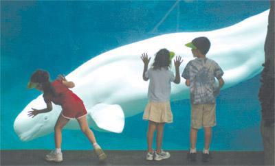 Mystic Aquarium Institution For Exploration Mystic