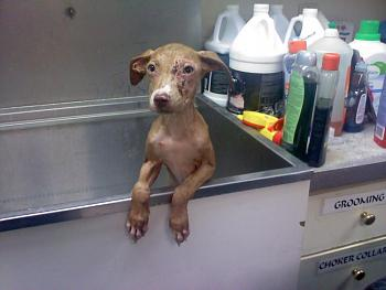 Support your Local SPCA-0724101759.jpg