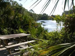 Sarasota Florida Sarasota Jungle Gardens Photo Picture Image