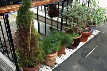 Free Tree from Lowes!-p132.jpg