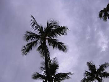 Weird Weather?-img_5539.jpg