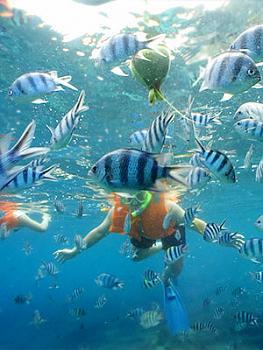 Hanauma Bay-snorkeling2.jpg