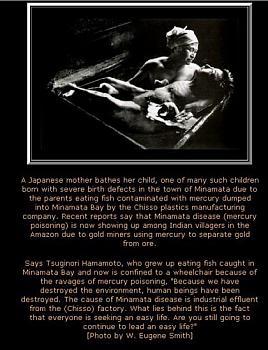 The Myth of Killer Mercury-minamata1.jpg