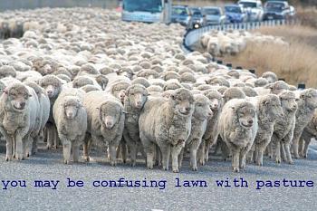 Zero Turn Mowers-sheep-herd.jpg