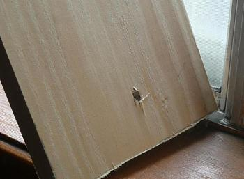 Armadillos-Pest Control-clipboard01.jpg