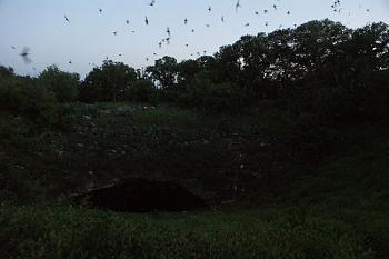 Mosquito Repellent-bracken_cave_bats_dark.jpg