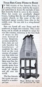 Mosquito Repellent-bat_tower.jpg