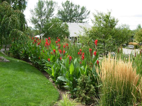 Garden Landscaping Forum further Low Maintenance Landscaping Low Maintenance Garden Ideas Front Yard furthermore Simple Tree House Design Plans further Australian Native Gardens in addition Low Maintenance Plants. on small drought tolerant front yard landscaping ideas
