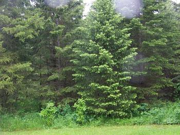 Tree lights!-100_1093.jpg