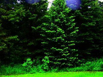 Tree lights!-100_1094j.jpg