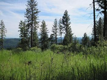 Let's see pictures of your place in Idaho!-land1.jpg