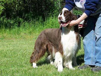 Billy, our English Springer, has cancer.-100_0363.jpg