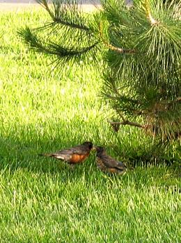 Wild Life pictures taken in Illinois-may-024_small.jpg