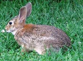 Wild Life pictures taken in Illinois-june20-011small.jpg
