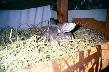 Wild Life pictures taken in Illinois-image001.jpg