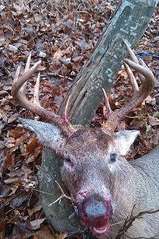Deer hunting?-imag0216.jpg