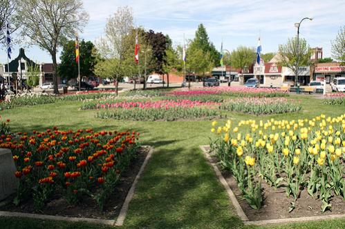 2019 Tulip Festival Extravaganza to be held March 13 ...