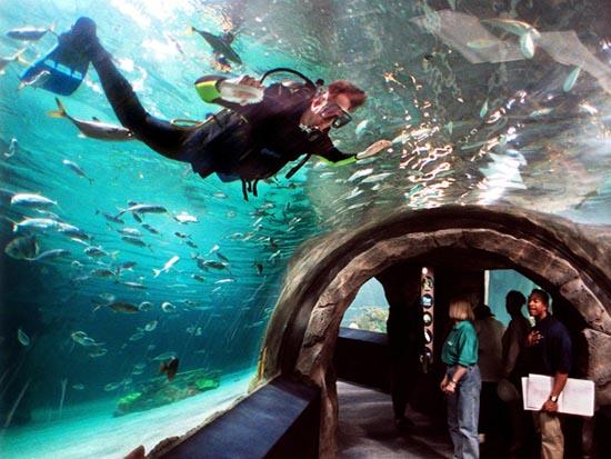 Newport Kentucky Newport Aquarium Photo Picture Image