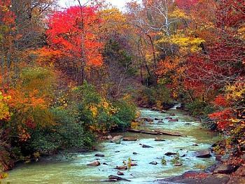 foliage in the fall-2504517650073457598s500x500q85.jpg