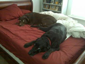 Dogs Dogs Dogs-img00020.jpg