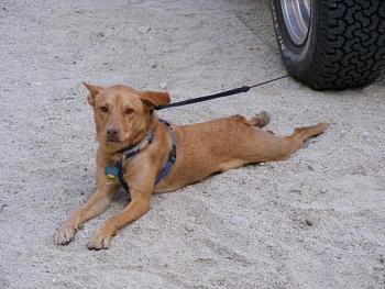 Dogs Dogs Dogs-dscf3114.jpg