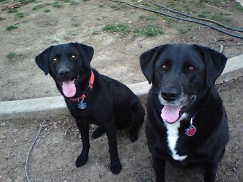 Dogs Dogs Dogs-0316001853.jpg