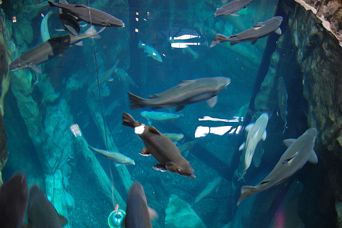 Duluth Minnesota Great Lakes Aquarium Photo Picture Image