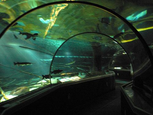 bloomington minnesota sea minnesota aquarium photo picture image